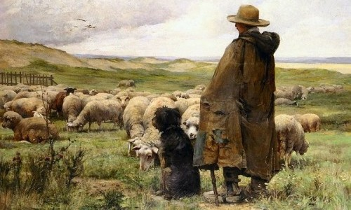 The Shepherd His Sheep And Sheepdogs