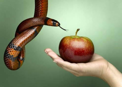 Jeffrey-Coolidge-female-hand-holding-apple-with-snake-eve-Getty-Images-Stone-83903036-e1368194108842