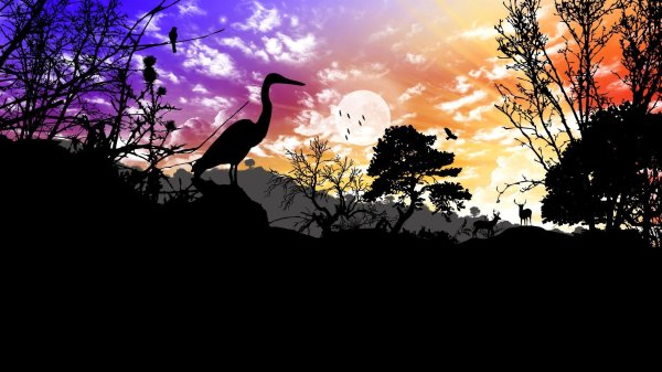 sky-clouds-sunset-tree-nature-landscape-animals-poultry-reindeer-silhouette-collage